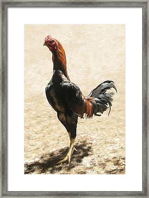 Big Rooster Framed Print by Lonnie C Tapia