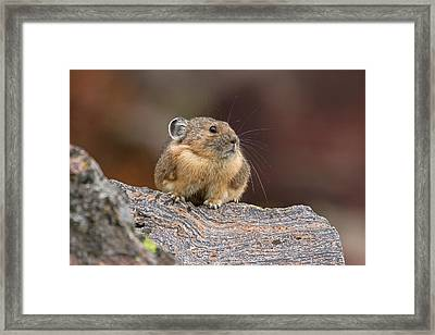 Big Things Come In Small Packages Framed Print by Sandy Sisti