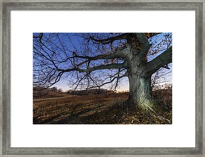 Big Wood Framed Print by Kristopher Schoenleber