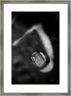 Big Yawn From This Monkey Framed Print by Thomas Woolworth
