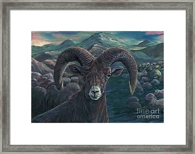 Bighorn Sheep Framed Print by Tom Blodgett Jr