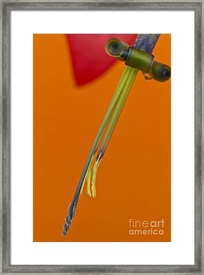 Bilbergia  Windii Detail Framed Print by Heiko Koehrer-Wagner