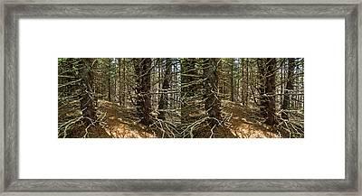 Billions Of Branches Framed Print by Matt Molloy