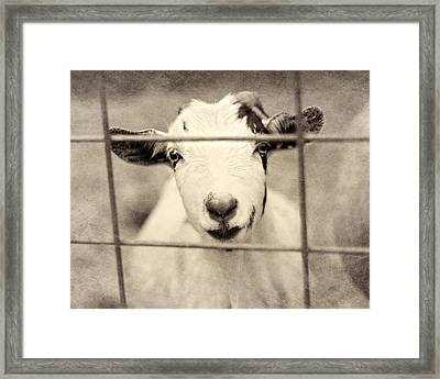 Billy G Framed Print by Amy Tyler
