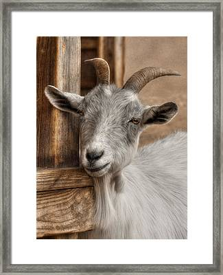 Billy Goat Framed Print by Lori Deiter