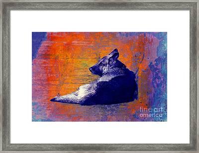 Bilo Framed Print by John  Kolenberg