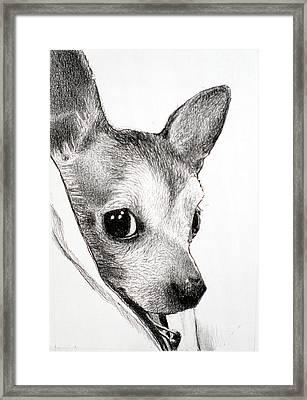 Binky Framed Print by Lorraine Zaloom