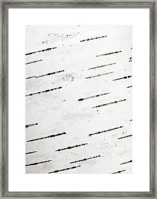 Birch Bark Framed Print by Steven Ralser