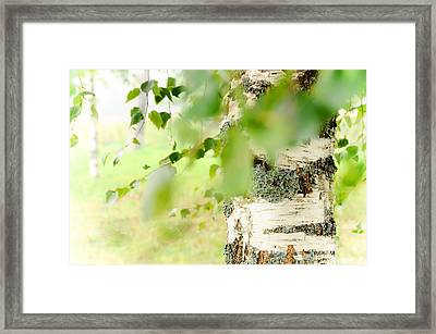Birch Tree. The Soul Of Russian Nature Framed Print by Jenny Rainbow