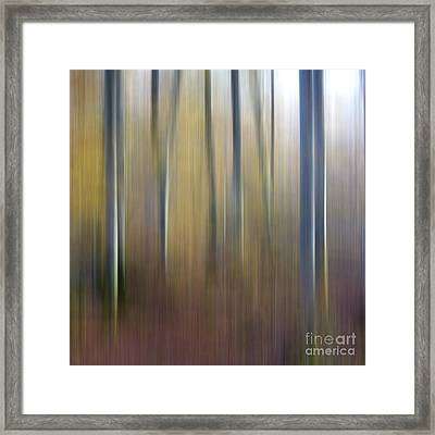 Birch Trees. Abstract. Blurred Framed Print by Bernard Jaubert