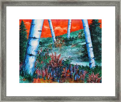 Birch Trees At Sunset Framed Print by Curtiss Shaffer