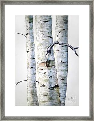 Birch Trees Framed Print by Christopher Shellhammer