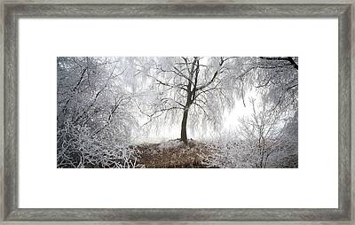 Birch Trees Covered With Snow Framed Print by Panoramic Images