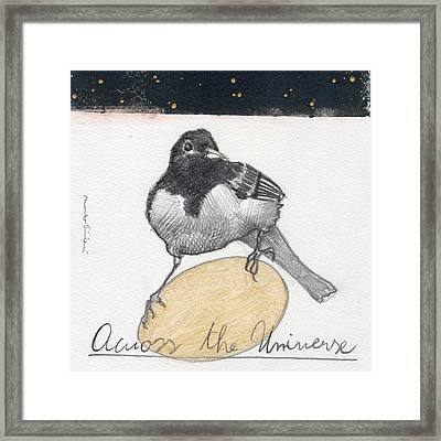 Bird 20 Framed Print by Marco Sivieri