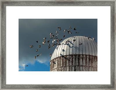 Bird - Birds Framed Print by Mike Savad