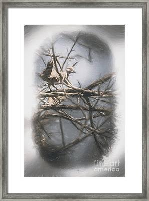 Bird From Woodslost Way Framed Print by Jorgo Photography - Wall Art Gallery