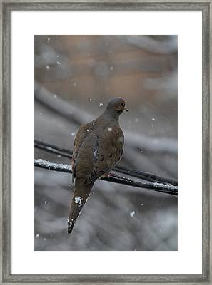 Bird In Snow - Animal - 01134 Framed Print by DC Photographer