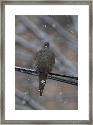 Bird In Snow - Animal - 01135 Framed Print by DC Photographer