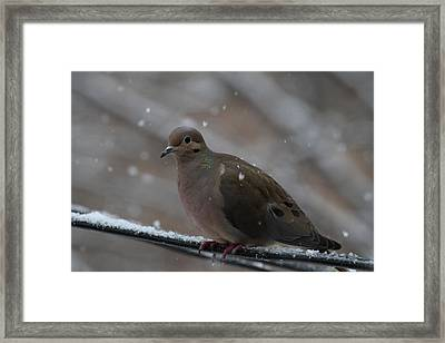 Bird In Snow - Animal - 01138 Framed Print by DC Photographer