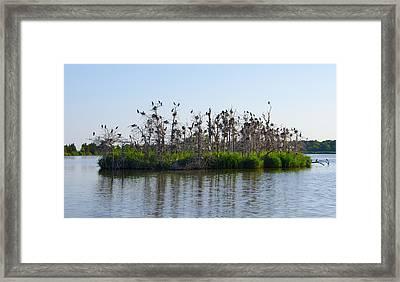 Bird Island Framed Print by Bill Cannon
