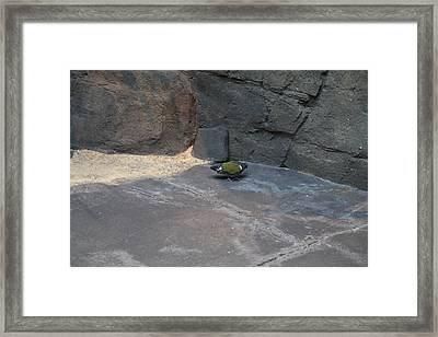 Bird - National Aquarium In Baltimore Md - 12127 Framed Print by DC Photographer