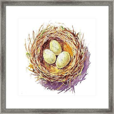 Bird Nest A Happy Trio Framed Print by Irina Sztukowski