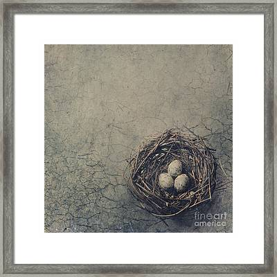 Bird Nest Framed Print by Jelena Jovanovic