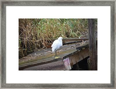 Bird Framed Print by Nicholas Outar