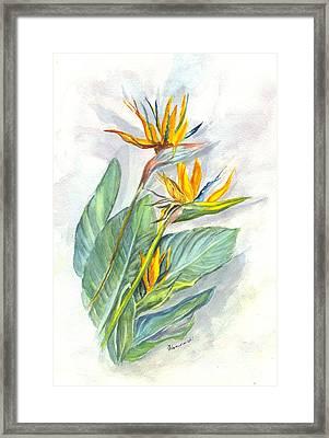Bird Of Paradise Framed Print by Carol Wisniewski