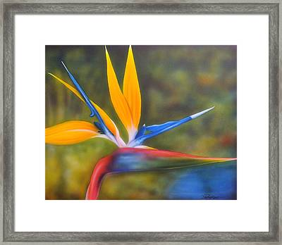 Bird Of Paradise Framed Print by Darren Robinson