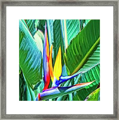 Bird Of Paradise Framed Print by Dominic Piperata