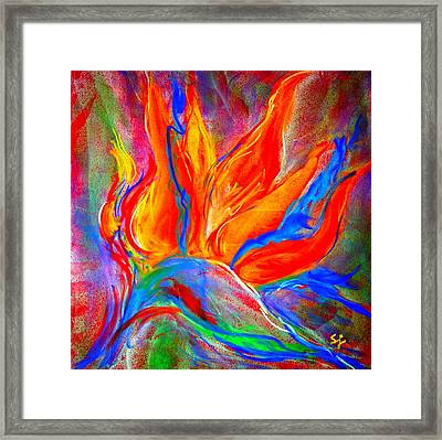 Bird Of Paradise Flower Framed Print by Sue Jacobi