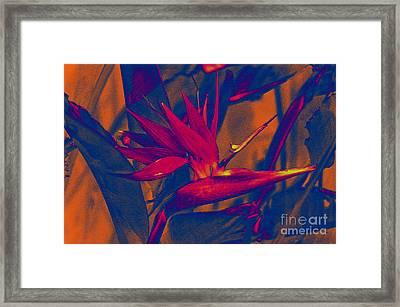 Bird Of Paradise Flower Framed Print by Susanne Van Hulst