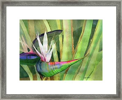 Bird Of Paradise Framed Print by Kris Parins