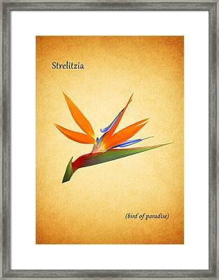 Bird Of Paradise Framed Print by Mark Rogan