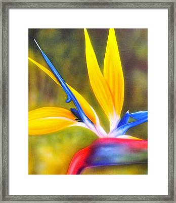 Bird Of Paradise Revisited Framed Print by Darren Robinson