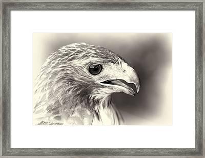 Bird Of Prey Framed Print by Dan Sproul