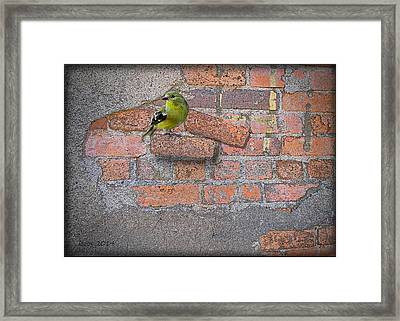 Bird On A Brick Framed Print by Larry Bishop