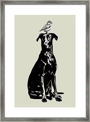 Bird On Head Framed Print by Flo Karp
