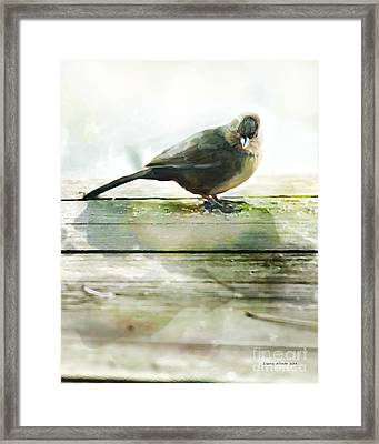 Bird On The Deck Framed Print by Artist and Photographer Laura Wrede