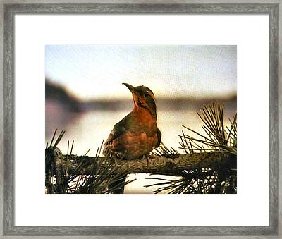 Bird On The Wire Framed Print by Luis Ludzska