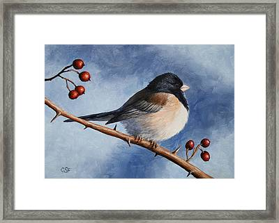 Bird Painting - Dark-eyed Junco Framed Print by Crista Forest