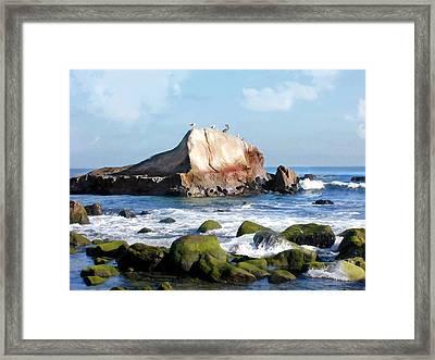 Bird Sentry Rock At Dana Point Harbor Framed Print by Elaine Plesser
