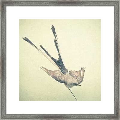 Bird Study No1 Framed Print by Cassia Beck