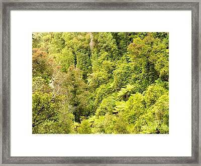 Bird View Of Lush Green Sub-tropical Nz Rainforest Framed Print by Stephan Pietzko