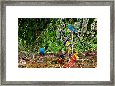 Birds Bathing Framed Print by Anthony Mercieca