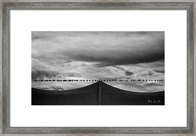 Birds Framed Print by Bob Orsillo