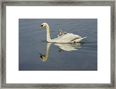 Birds Eye View Framed Print by Adrian Campfield