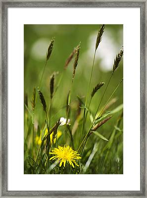 Bird's Eye View Framed Print by Christina Rollo