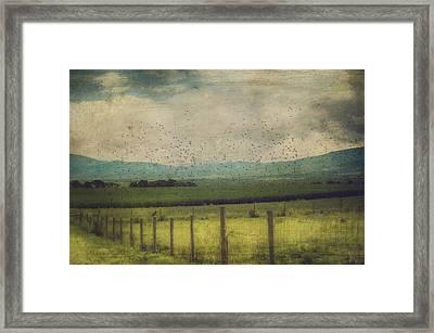 Birds In The Cornfield Framed Print by Kathy Jennings